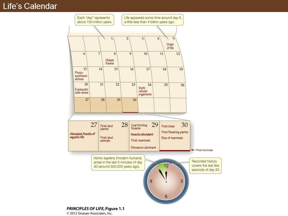 Lifes Calendar