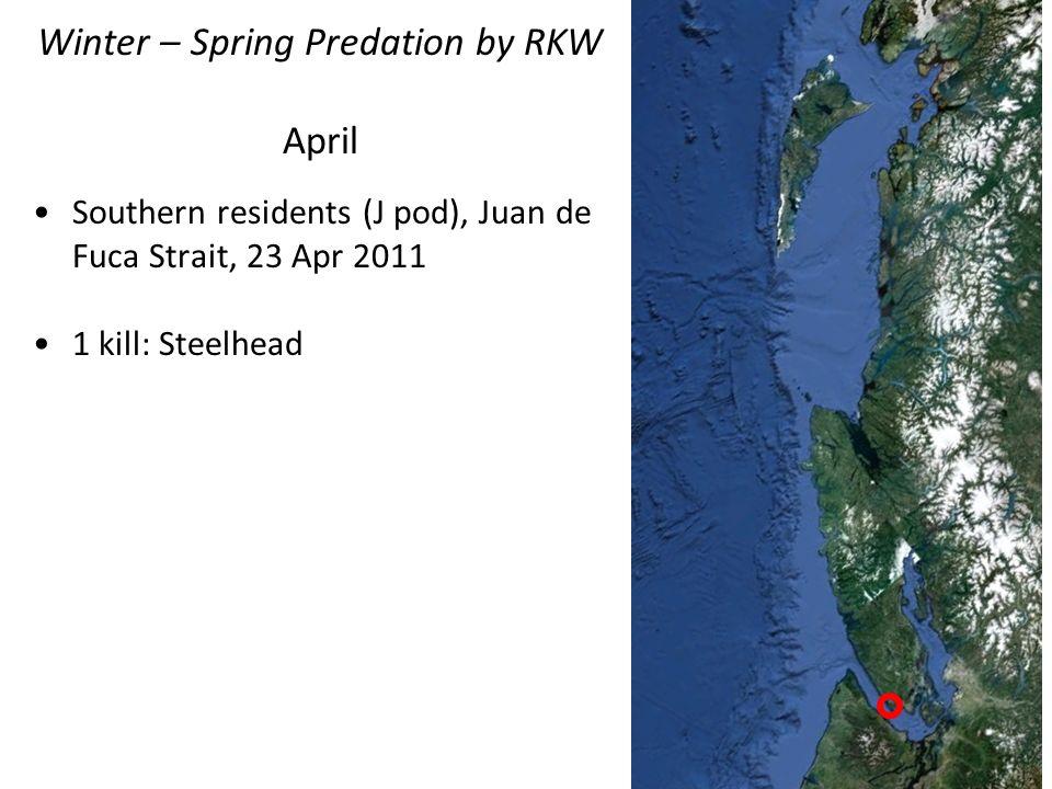 Winter – Spring Predation by RKW April Southern residents (J pod), Juan de Fuca Strait, 23 Apr 2011 1 kill: Steelhead