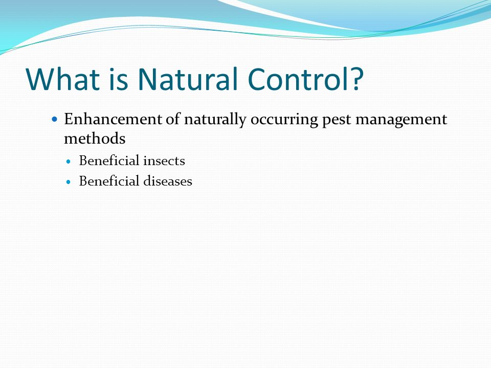 What is Natural Control? Enhancement of naturally occurring pest management methods Beneficial insects Beneficial diseases