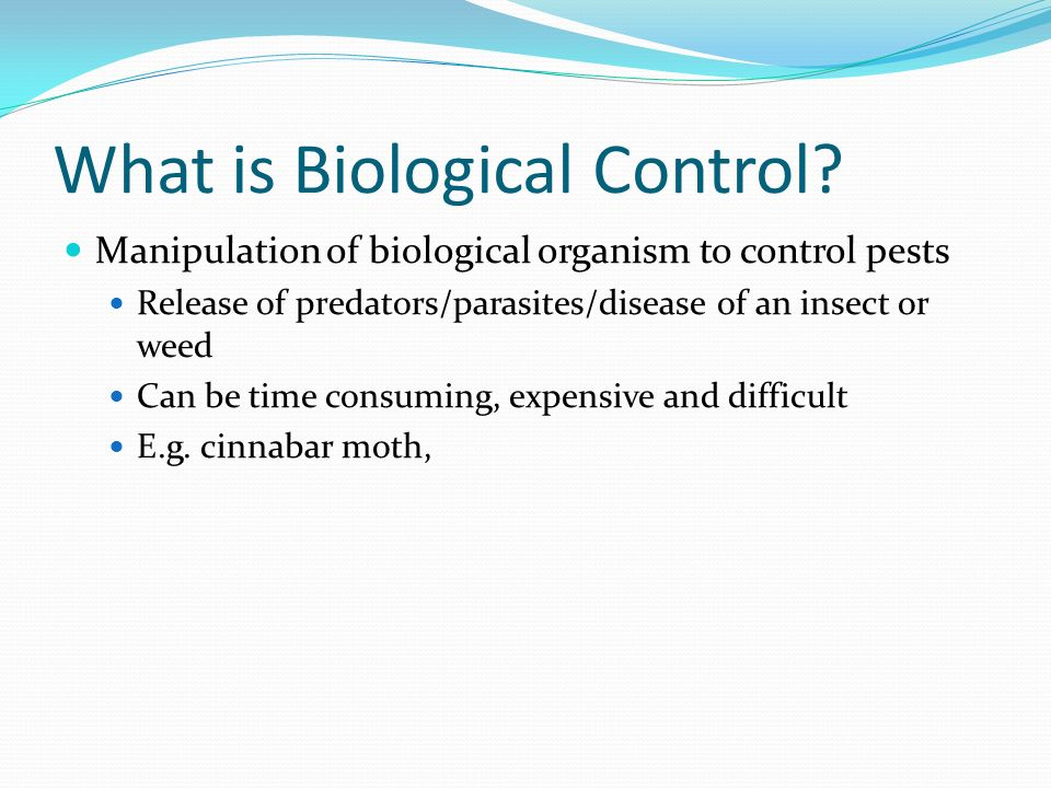 What is Biological Control? Manipulation of biological organism to control pests Release of predators/parasites/disease of an insect or weed Can be ti