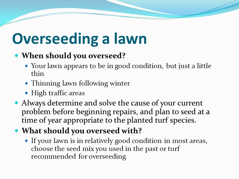 Overseeding a lawn When should you overseed? Your lawn appears to be in good condition, but just a little thin Thinning lawn following winter High tra