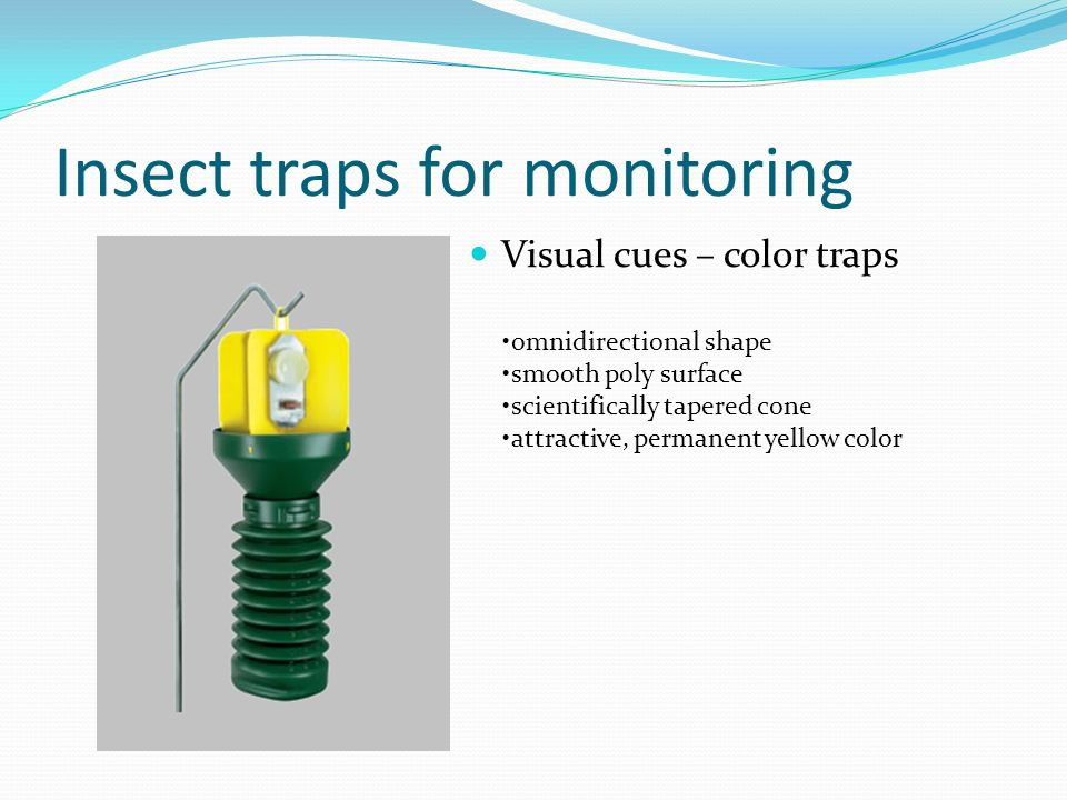 Insect traps for monitoring Visual cues – color traps omnidirectional shape smooth poly surface scientifically tapered cone attractive, permanent yell