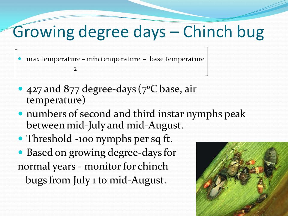 Growing degree days – Chinch bug max temperature – min temperature – base temperature 2 427 and 877 degree-days (7ºC base, air temperature) numbers of
