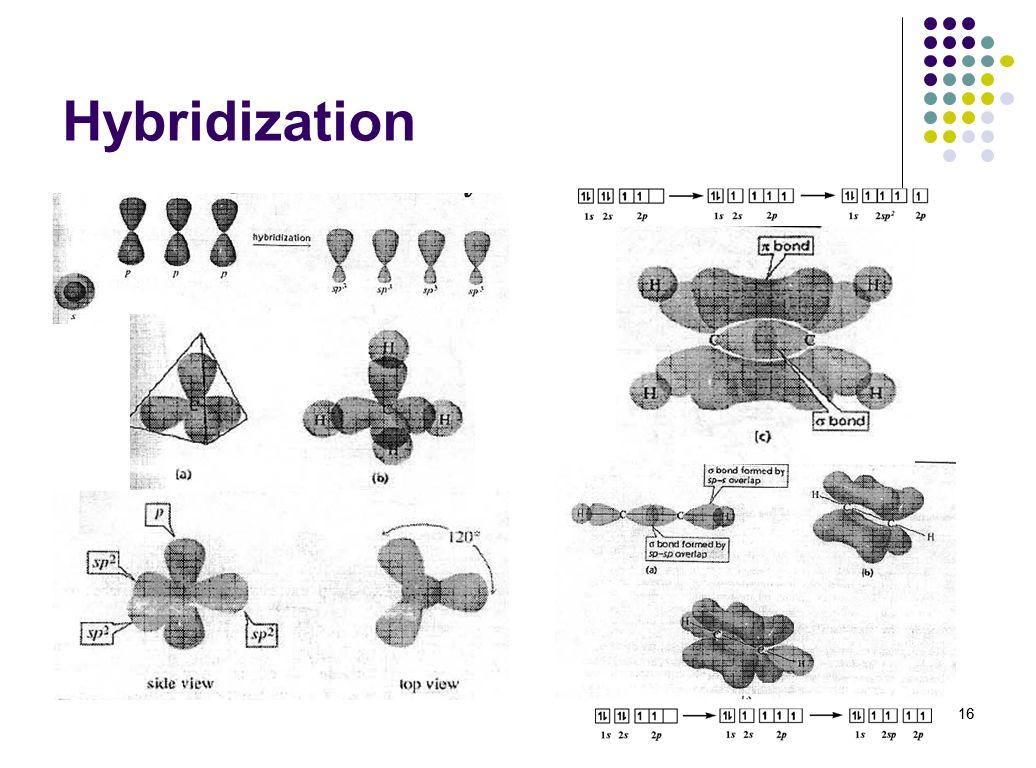 16 Hybridization 16