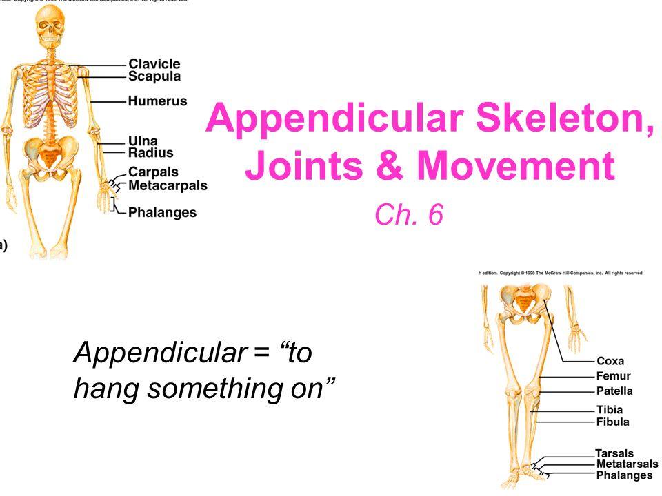 33 Sternum Breastbone Three parts: –Manubrium (handle) Jugular notch – superior to manubrium; between clavicular articulations –Body Sternal angle – a
