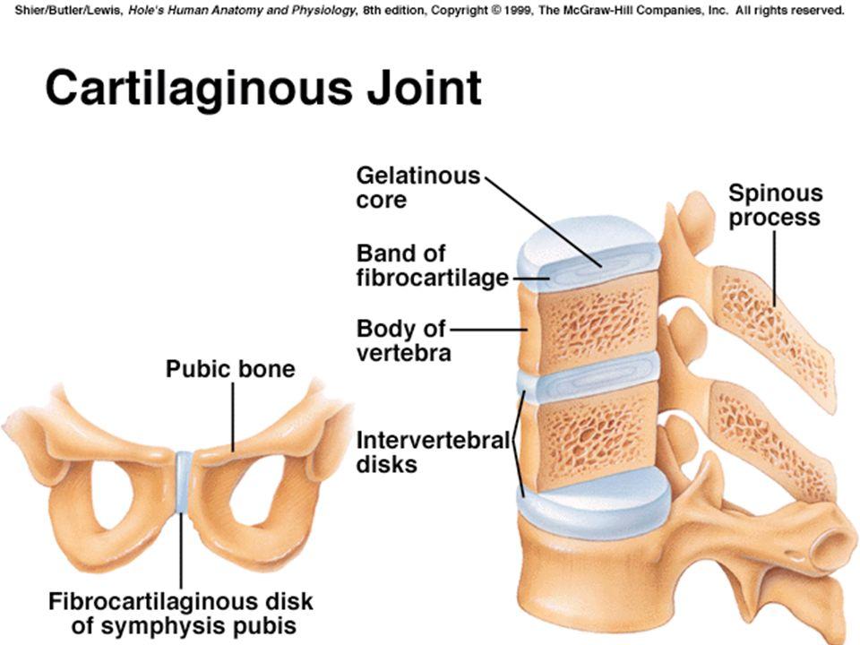 52 Fibrous Joints