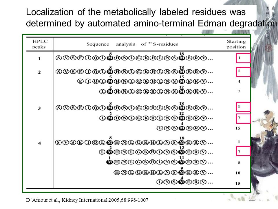 Localization of the metabolically labeled residues was determined by automated amino-terminal Edman degradation DAmour et al., Kidney International 2005,68:998-1007
