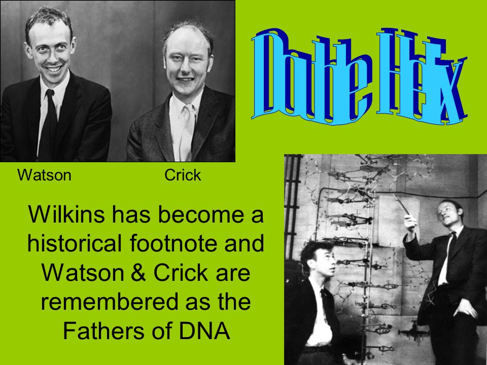 Wilkins has become a historical footnote and Watson & Crick are remembered as the Fathers of DNA WatsonCrick