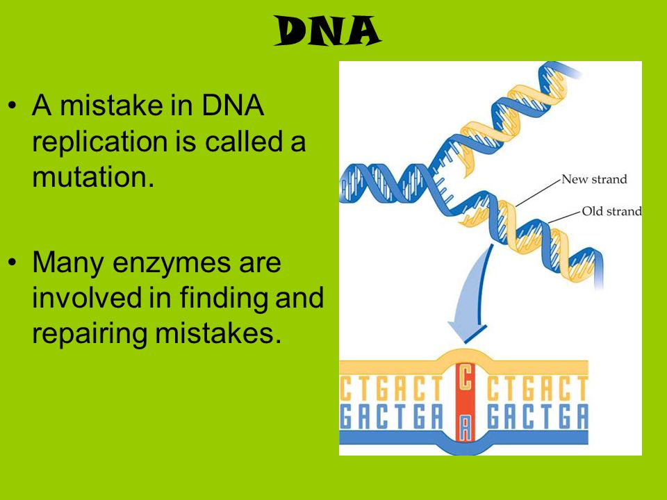 DNA A mistake in DNA replication is called a mutation. Many enzymes are involved in finding and repairing mistakes.