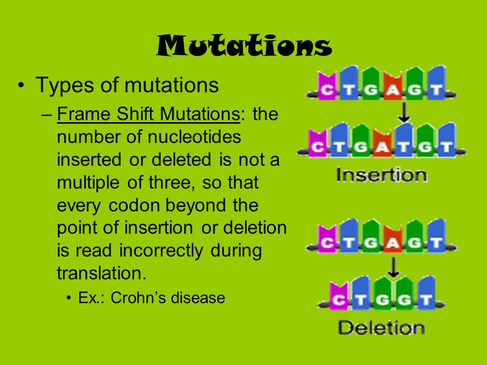 Mutations Types of mutations –Frame Shift Mutations: the number of nucleotides inserted or deleted is not a multiple of three, so that every codon bey