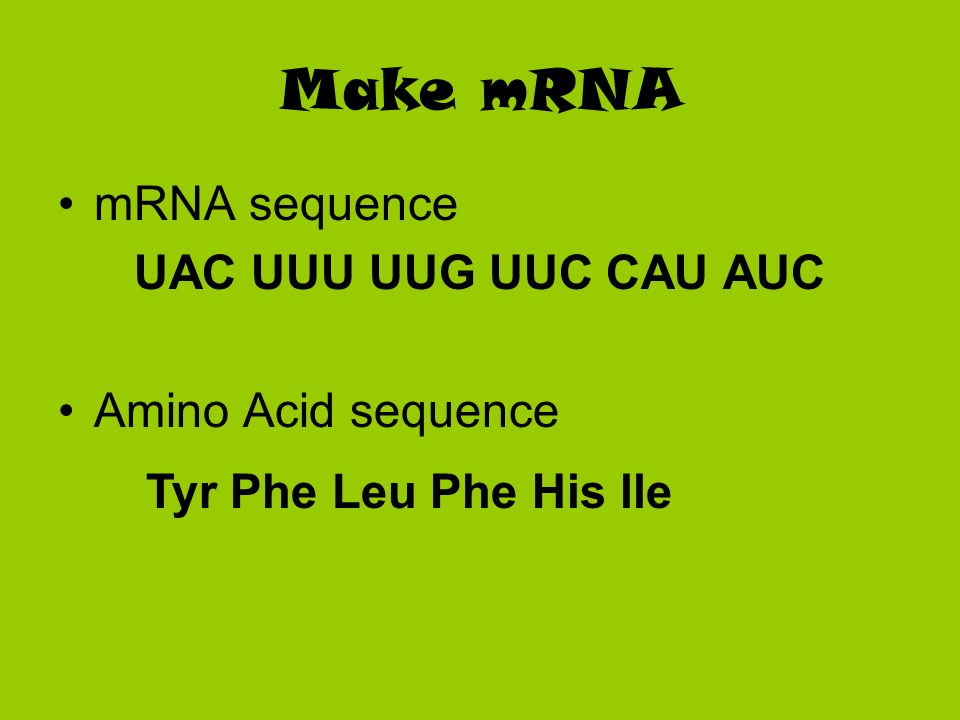 Make mRNA mRNA sequence UAC UUU UUG UUC CAU AUC Amino Acid sequence Tyr Phe Leu Phe His lle