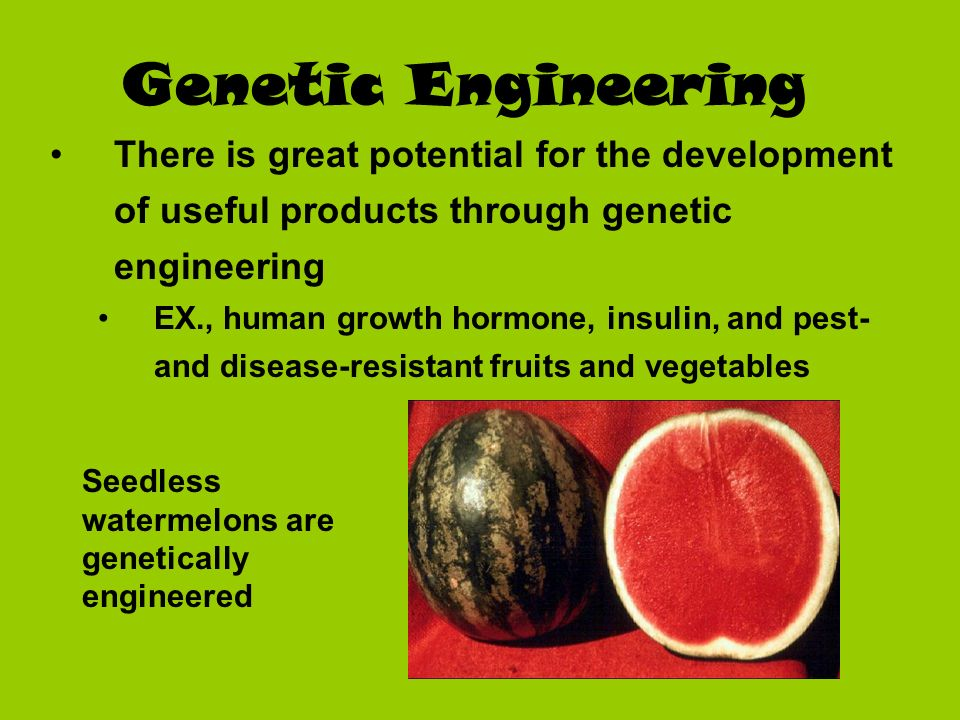 Genetic Engineering There is great potential for the development of useful products through genetic engineering EX., human growth hormone, insulin, an