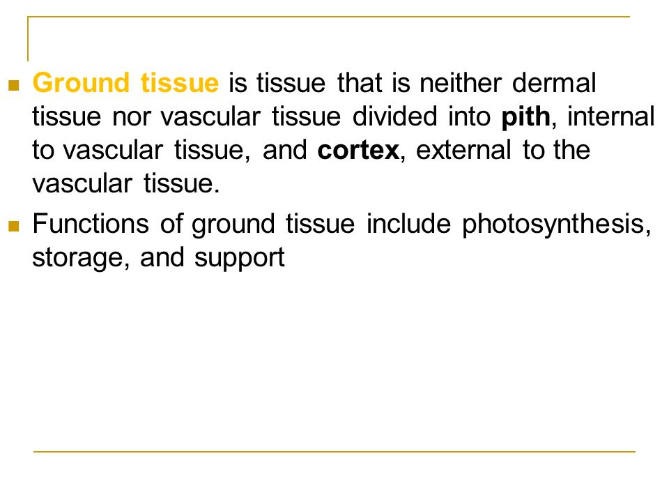 Ground tissue is tissue that is neither dermal tissue nor vascular tissue divided into pith, internal to vascular tissue, and cortex, external to the