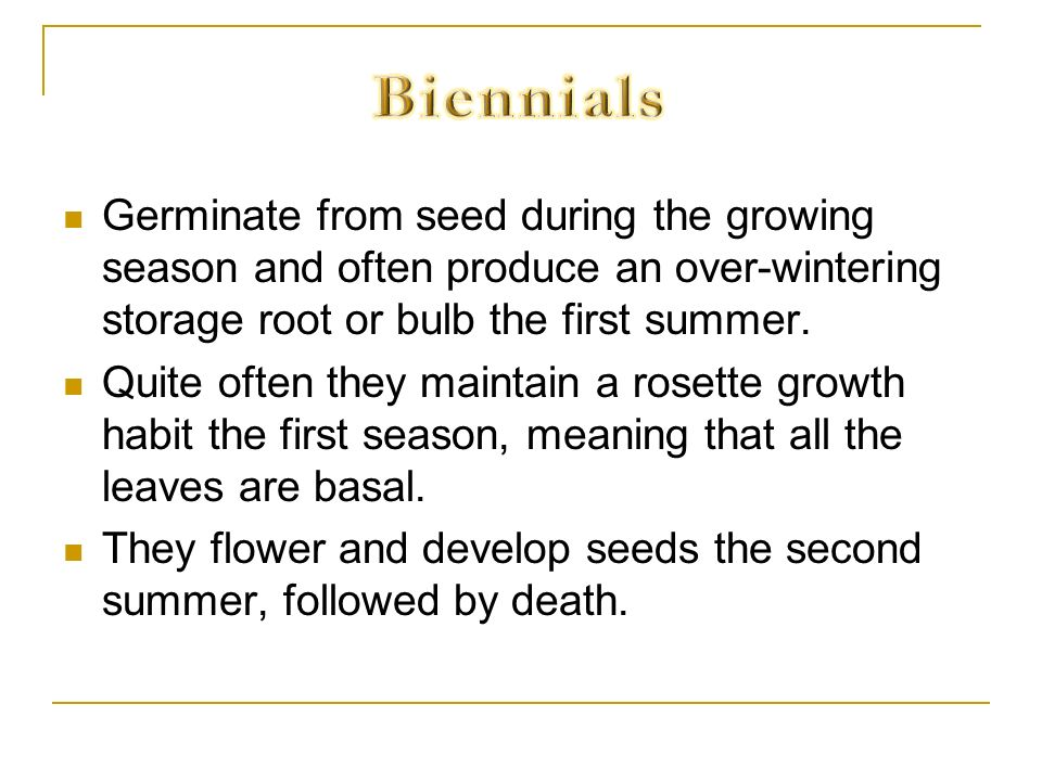 Germinate from seed during the growing season and often produce an over-wintering storage root or bulb the first summer. Quite often they maintain a r