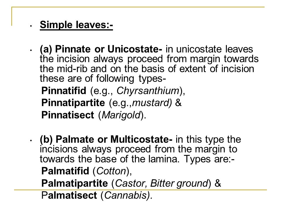 Simple leaves:- (a) Pinnate or Unicostate- in unicostate leaves the incision always proceed from margin towards the mid-rib and on the basis of extent