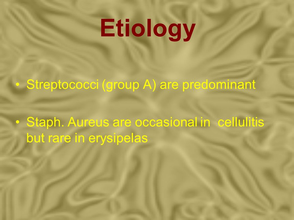 Etiology Streptococci (group A) are predominant Staph. Aureus are occasional in cellulitis but rare in erysipelas