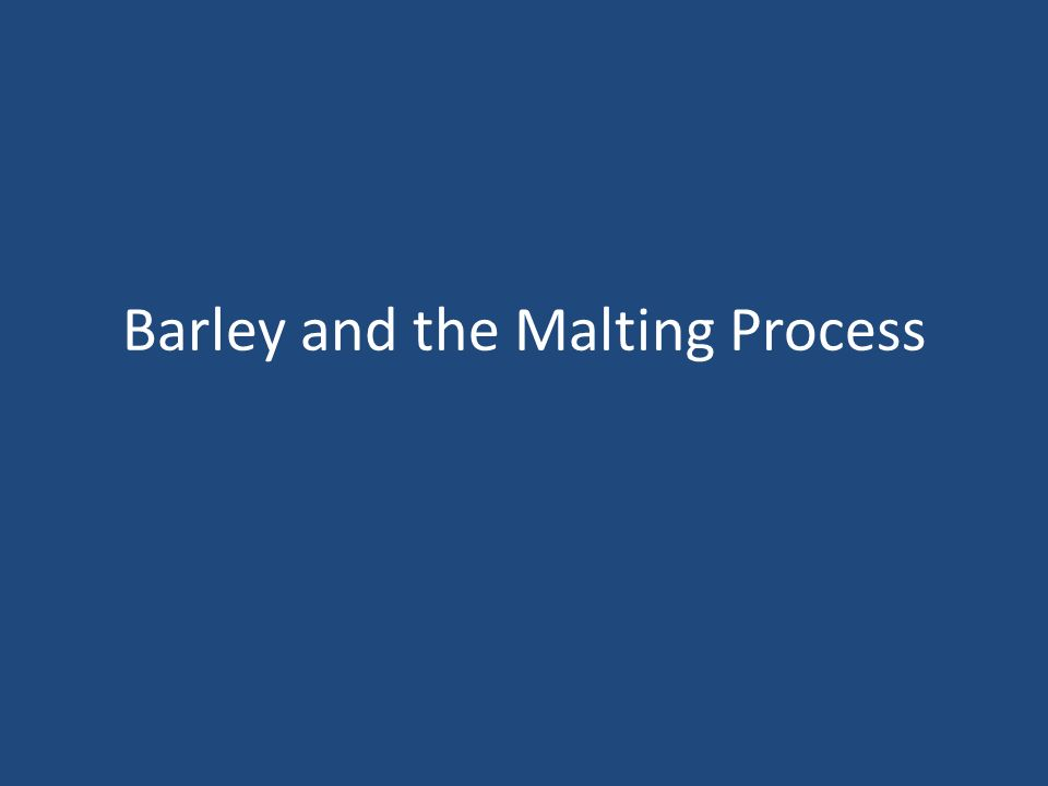 Overview The purpose of the malting process is to convert insoluble starch chains within grains into water soluble starches that can be used in the brewing process Barley malt is the most commonly used source of fermentable sugars in beer Other malted grains used in brewing include wheat, rye, oats and sorghum