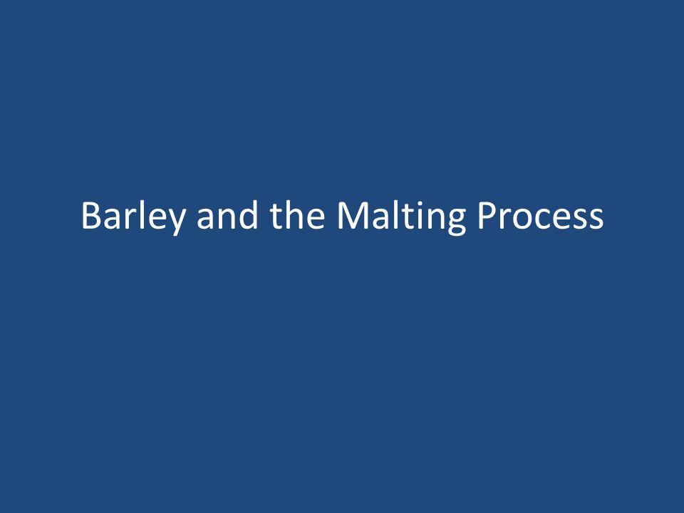Barley and the Malting Process