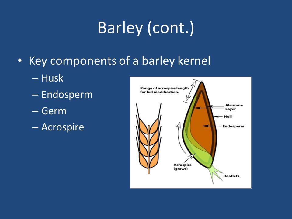 Barley (cont.) Key components of a barley kernel – Husk – Endosperm – Germ – Acrospire
