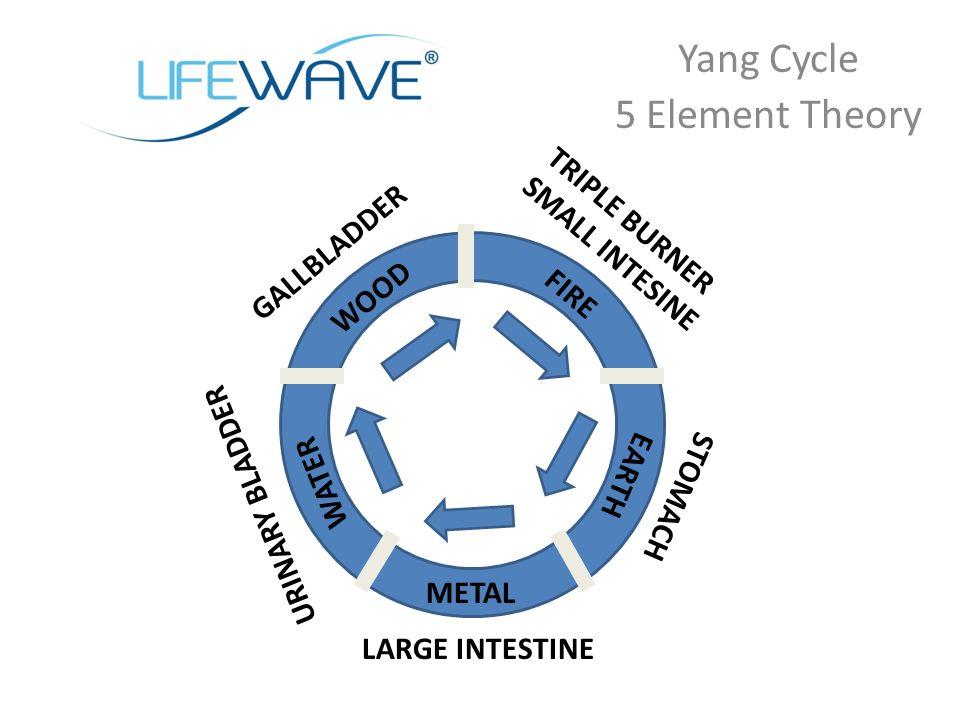 Yang Cycle 5 Element Theory WOOD FIRE EARTH METAL WATER GALLBLADDER TRIPLE BURNER SMALL INTESINE STOMACH LARGE INTESTINE URINARY BLADDER