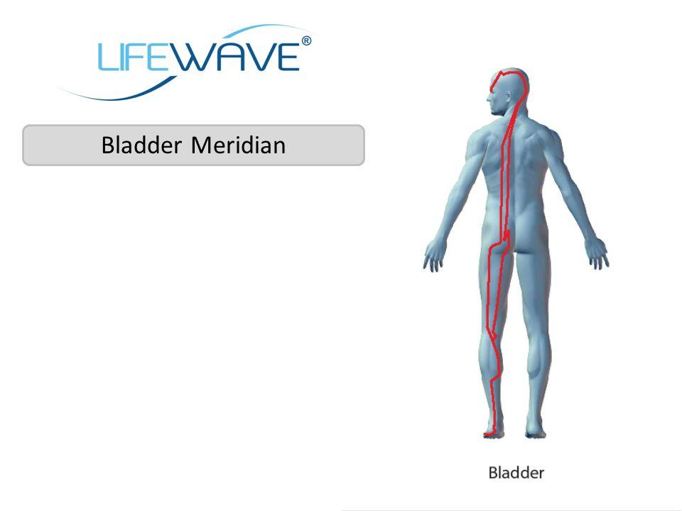 Bladder Meridian