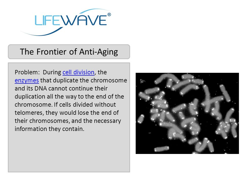 The Frontier of Anti-Aging Problem: During cell division, the enzymes that duplicate the chromosome and its DNA cannot continue their duplication all