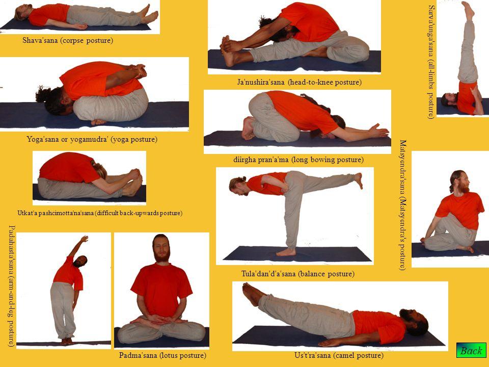 Back Shava'sana (corpse posture) Yoga'sana or yogamudra' (yoga posture) Sarva'unga'sana (all-limbs posture) Ja'nushira'sana (head-to-knee posture) dii