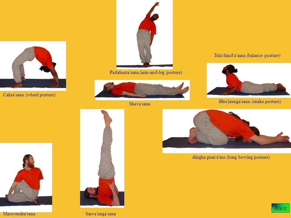 Back Cakra'sana (wheel posture) Matsyendra'sanaSarva'unga'sana Shava'sana Padahasta'sana (arm-and-leg posture) diirgha pran'a'ma (long bowing posture)