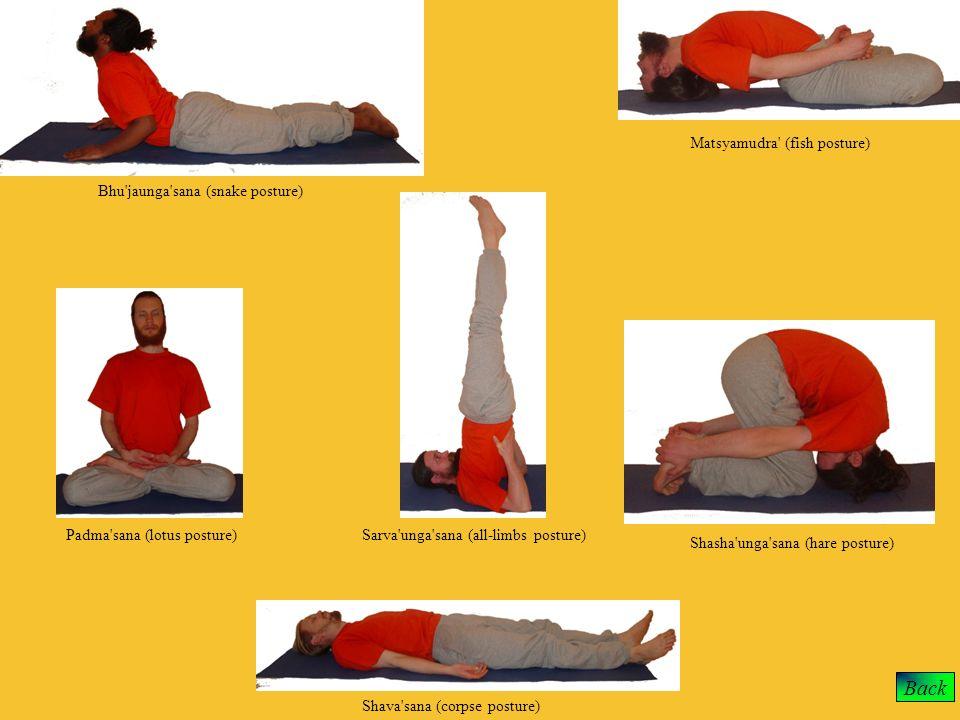 Bhu'jaunga'sana (snake posture) Padma'sana (lotus posture) Shava'sana (corpse posture) Sarva'unga'sana (all-limbs posture) Matsyamudra' (fish posture)