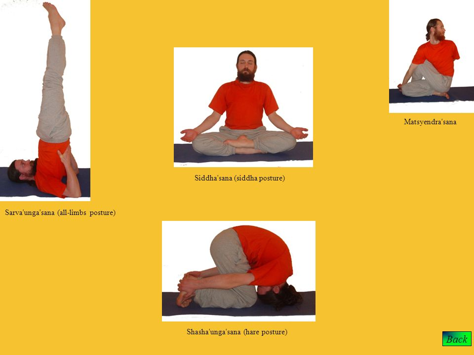 Back Matsyendra'sana Siddha'sana (siddha posture) Sarva'unga'sana (all-limbs posture) Shasha'unga'sana (hare posture)