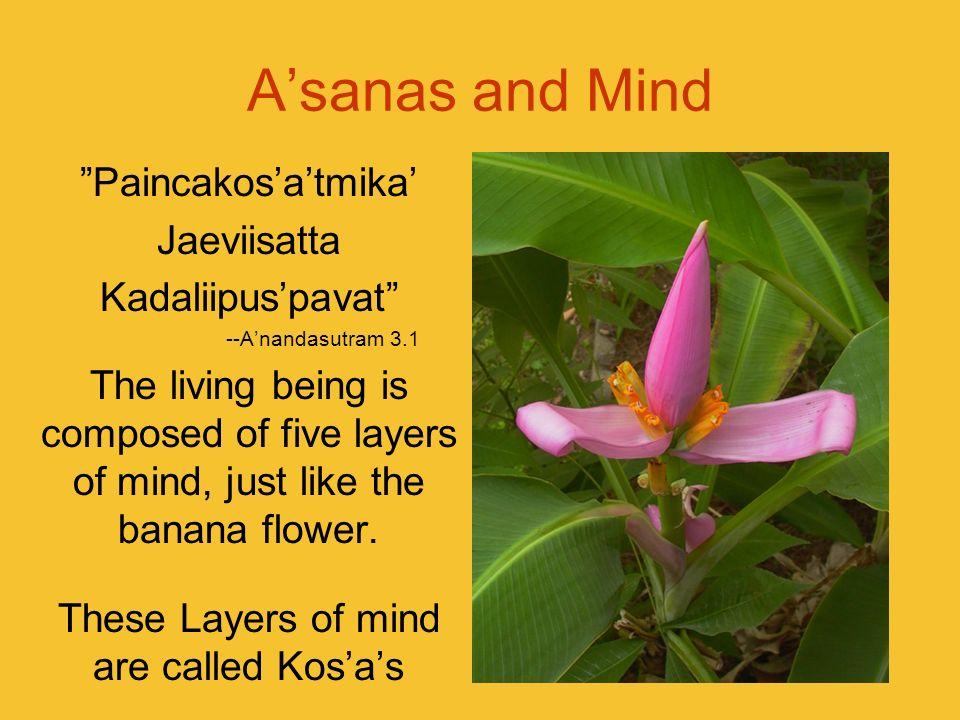 Asanas and Mind Paincakosatmika Jaeviisatta Kadaliipuspavat --Anandasutram 3.1 The living being is composed of five layers of mind, just like the bana