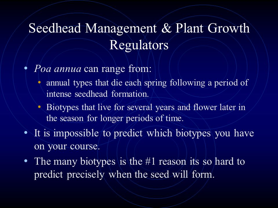 Seedhead Management & Plant Growth Regulators Poa is not a single, uniform turf species. It has a large number of turf subspecies or biotypes.