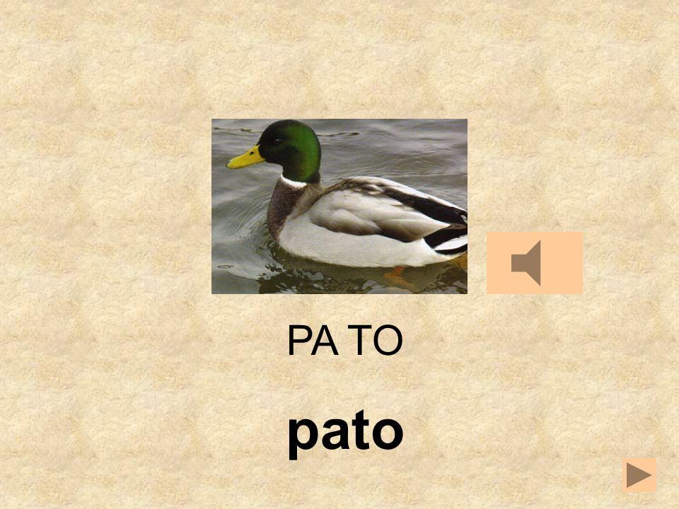 TO LAPA NO PA __