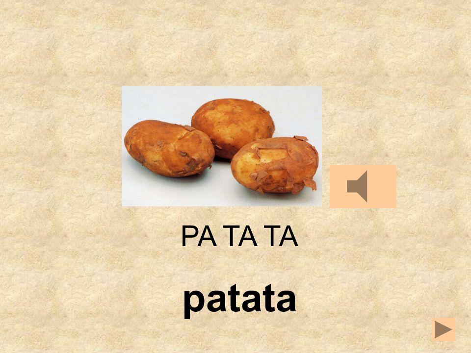 TA MATE PA PA TA __