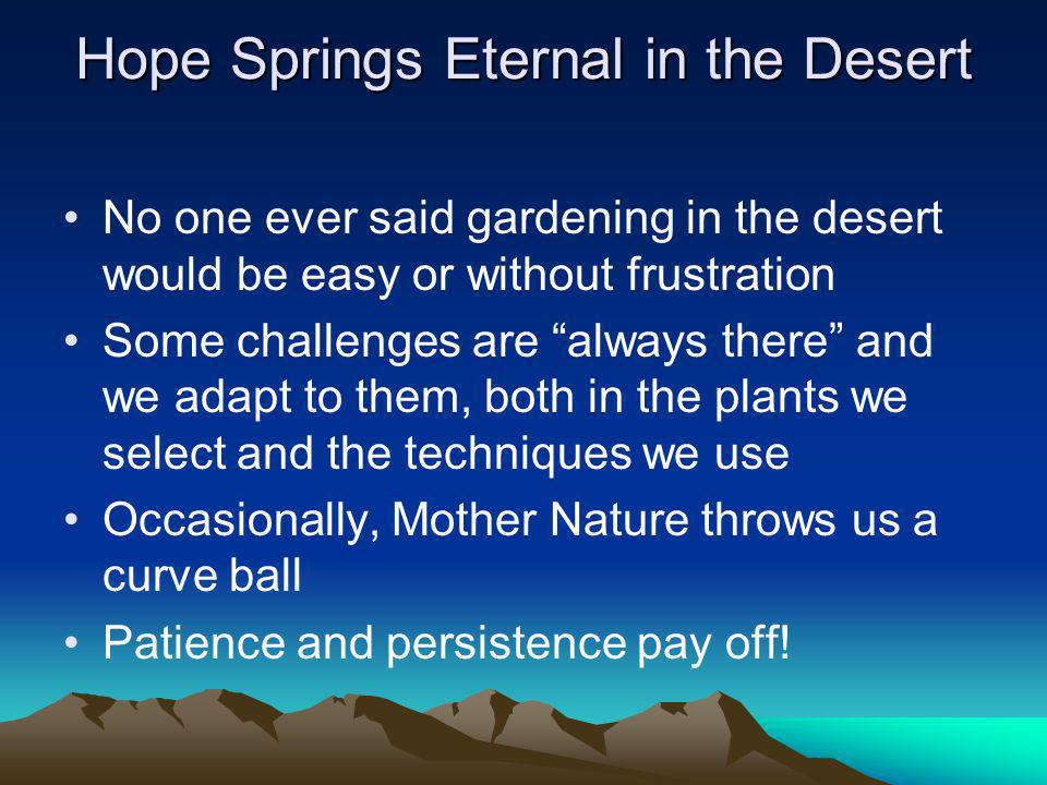 Hope Springs Eternal in the Desert No one ever said gardening in the desert would be easy or without frustration Some challenges are always there and we adapt to them, both in the plants we select and the techniques we use Occasionally, Mother Nature throws us a curve ball Patience and persistence pay off!