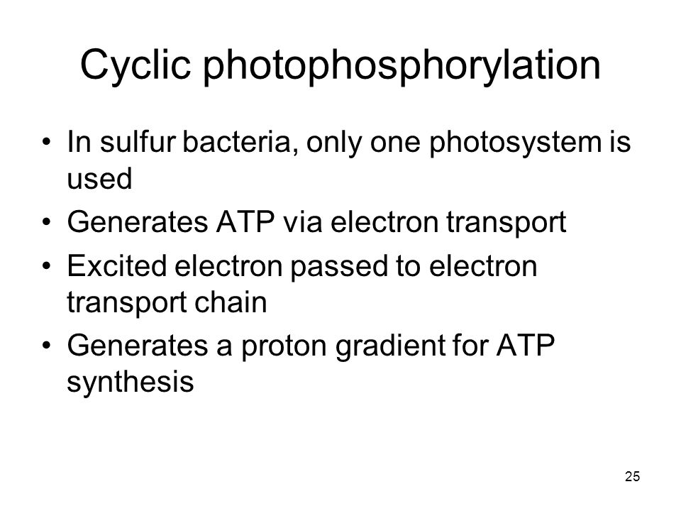 25 In sulfur bacteria, only one photosystem is used Generates ATP via electron transport Excited electron passed to electron transport chain Generates