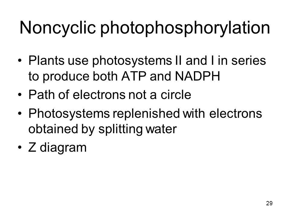 29 Noncyclic photophosphorylation Plants use photosystems II and I in series to produce both ATP and NADPH Path of electrons not a circle Photosystems