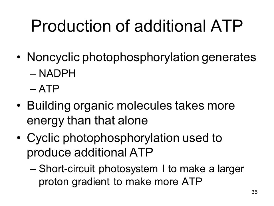 Production of additional ATP Noncyclic photophosphorylation generates –NADPH –ATP Building organic molecules takes more energy than that alone Cyclic