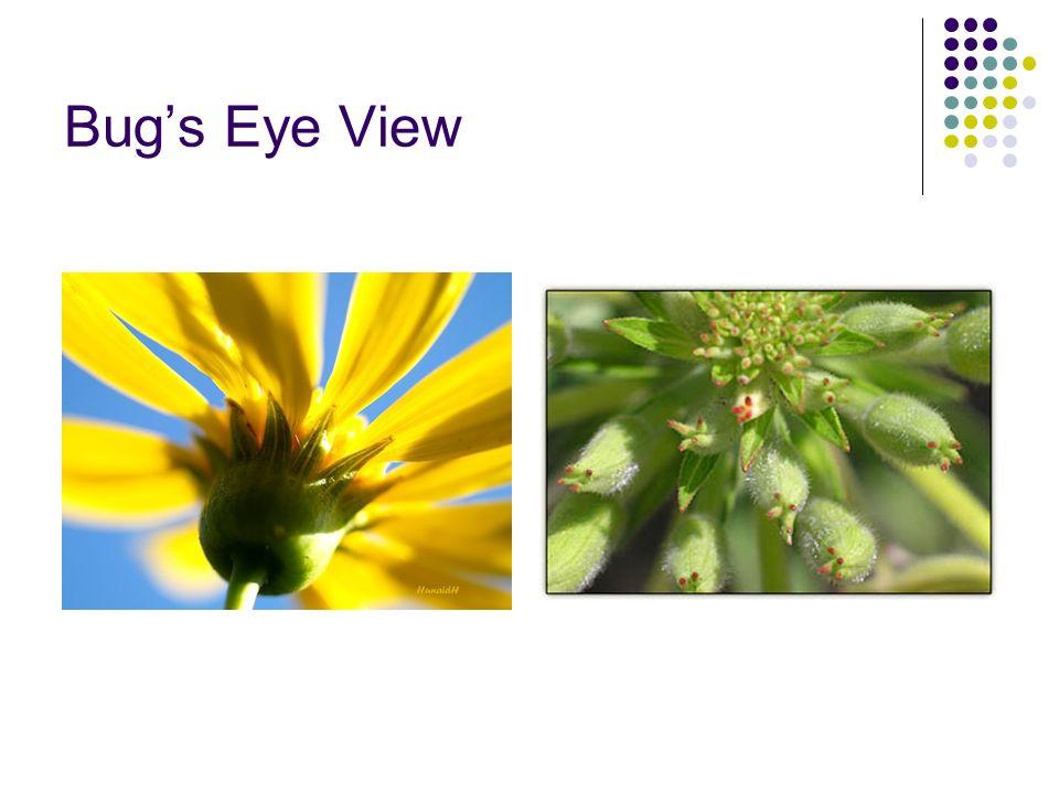 Bugs Eye View