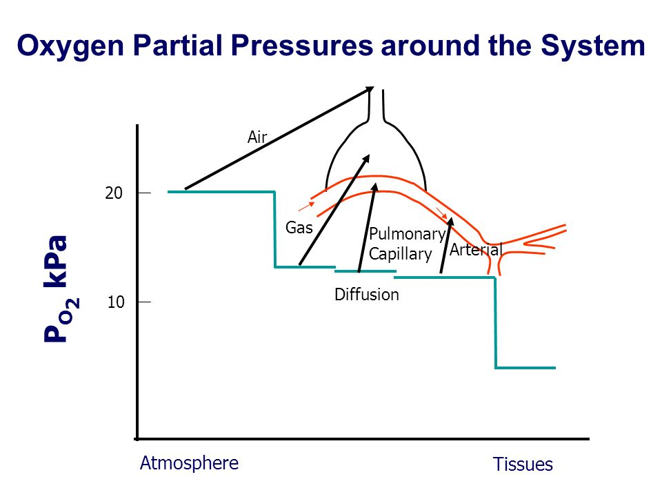 Oxygen Partial Pressures around the System 20 Atmosphere Tissues 10 Air Gas Pulmonary Capillary Diffusion Arterial P O 2 kPa