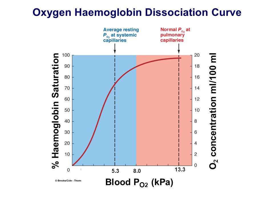 Oxygen Haemoglobin Dissociation Curve O 2 concentration ml/100 ml 5.3 13.3 Blood P O 2 (kPa) % Haemoglobin Saturation 8.0