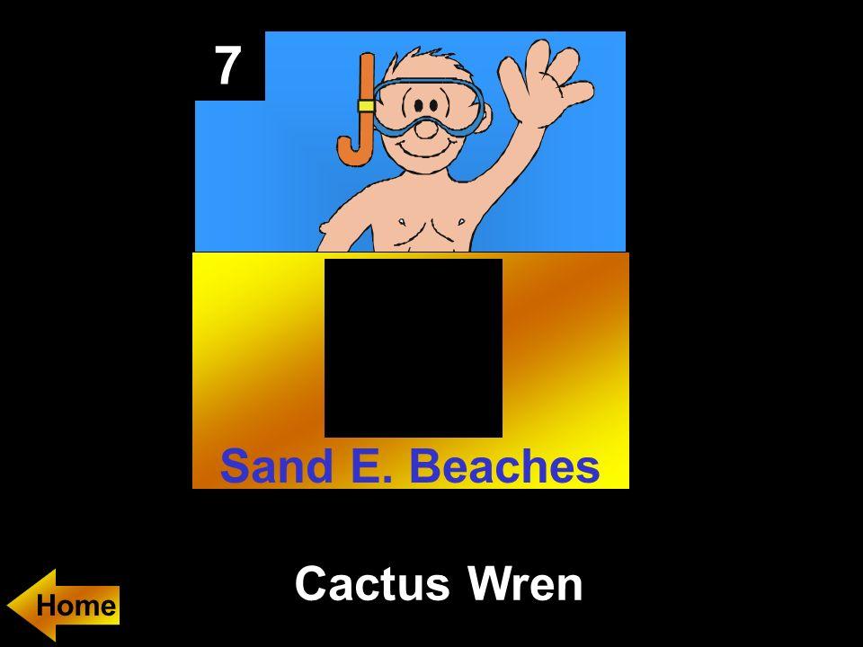 7 Cactus Wren Home Sand E. Beaches