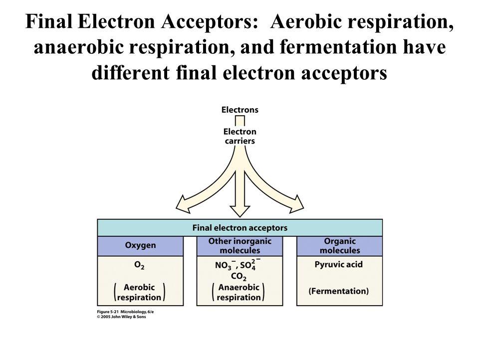 Final Electron Acceptors: Aerobic respiration, anaerobic respiration, and fermentation have different final electron acceptors