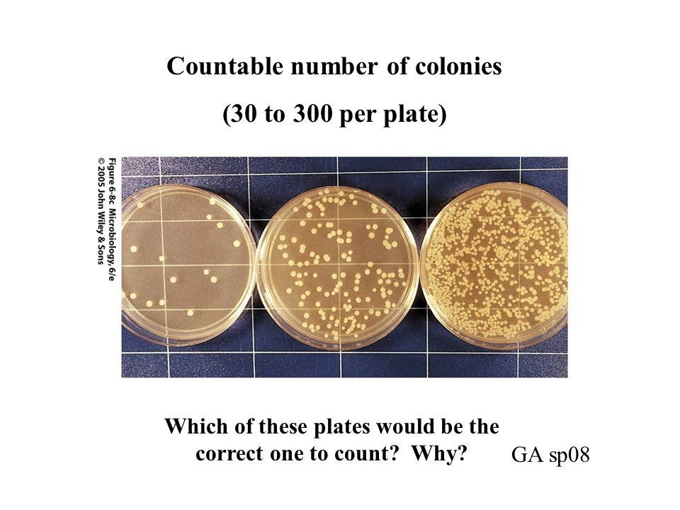 Which of these plates would be the correct one to count? Why? Countable number of colonies (30 to 300 per plate) GA sp08