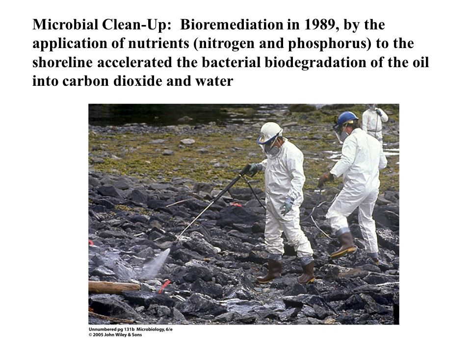 Microbial Clean-Up: Bioremediation in 1989, by the application of nutrients (nitrogen and phosphorus) to the shoreline accelerated the bacterial biode