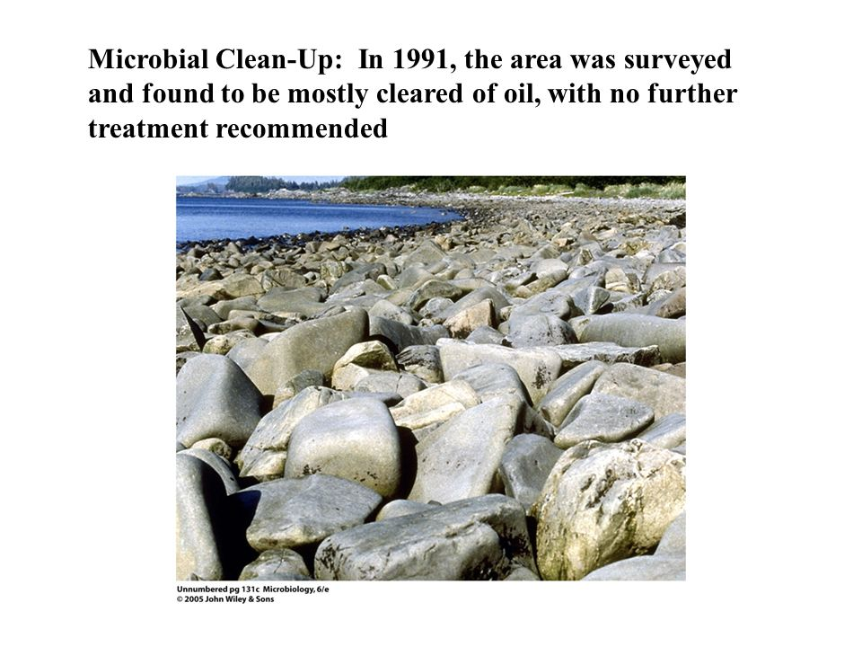 Microbial Clean-Up: In 1991, the area was surveyed and found to be mostly cleared of oil, with no further treatment recommended
