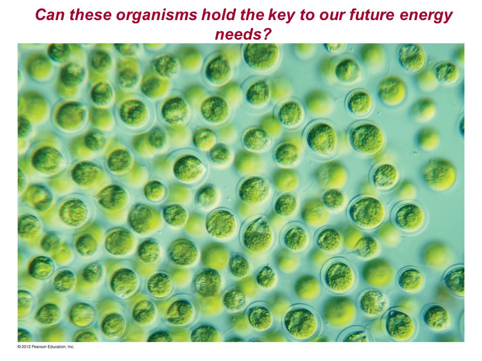 Can these organisms hold the key to our future energy needs?