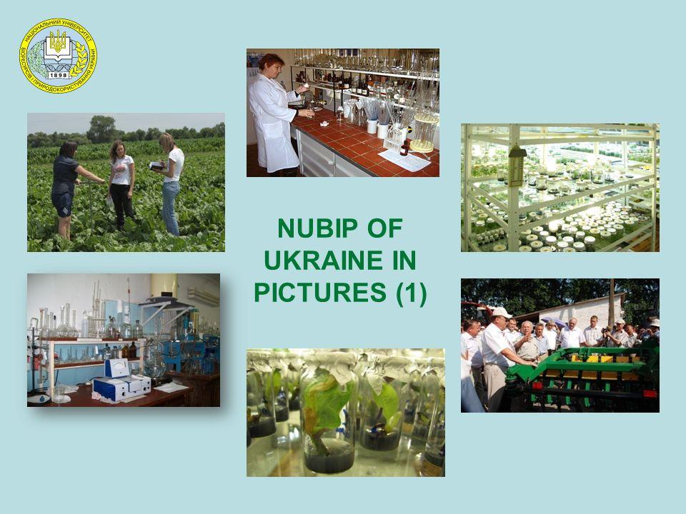 NUBIP OF UKRAINE IN PICTURES (1)
