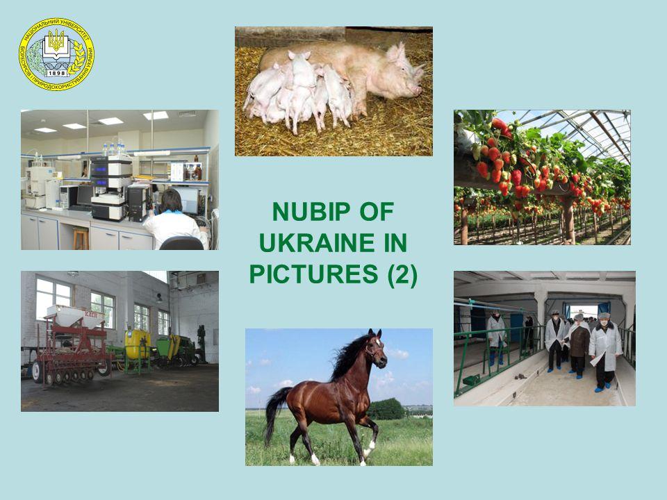 NUBIP OF UKRAINE IN PICTURES (2)