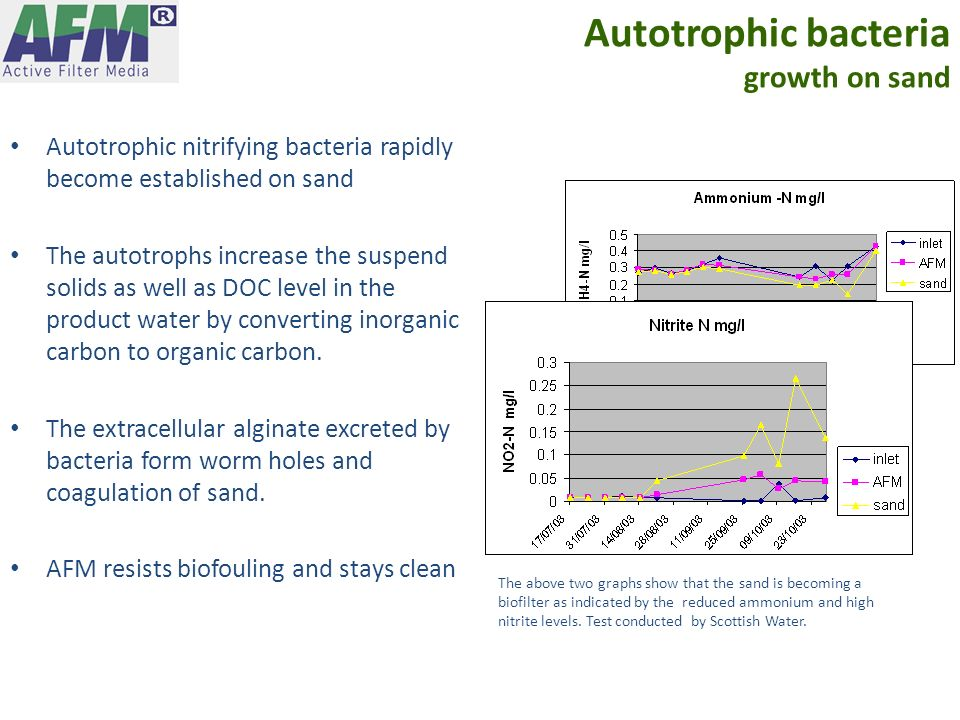 Autotrophic bacteria growth on sand Autotrophic nitrifying bacteria rapidly become established on sand The autotrophs increase the suspend solids as w